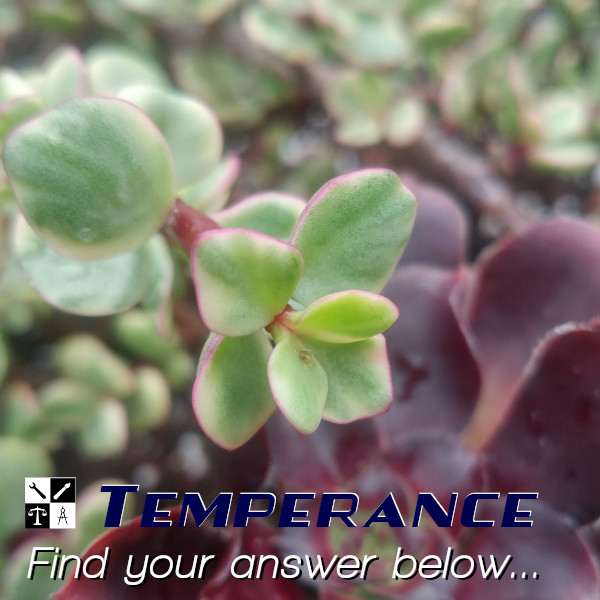 Temperance, an Interfanatic Quality. Interfanatic Digital Marketing founder Ryan Delane takes or creates every image you see in our social feed.